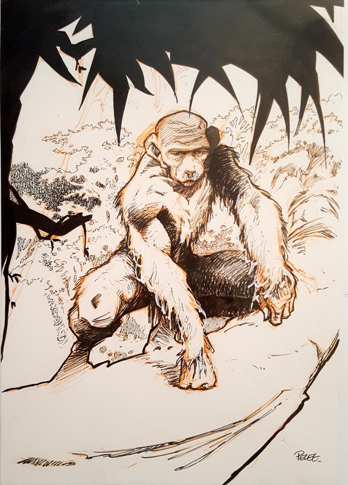 Claude Pelet Illustrateur - Homo gorillus