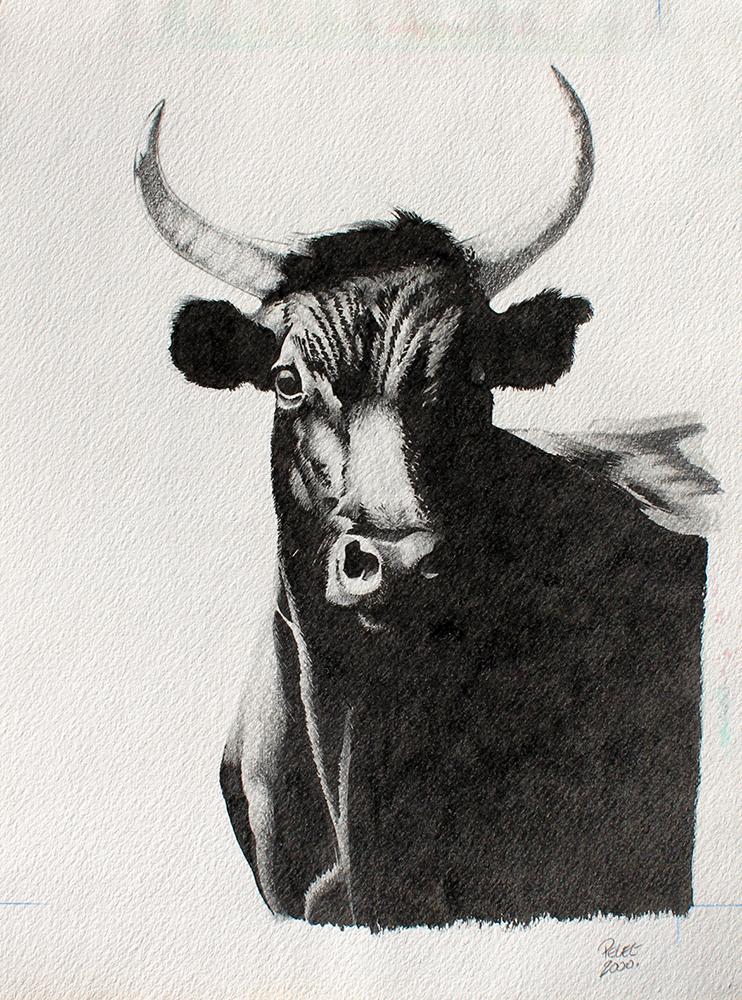 Claude Pelet Illustrateur - Le Biou